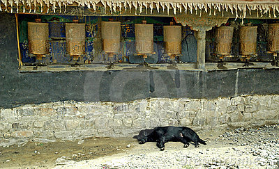 Prayer Wheels In Tibet With Dog