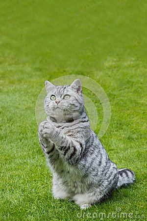 Free Praying Cat On Green Grass Royalty Free Stock Photography - 46473047