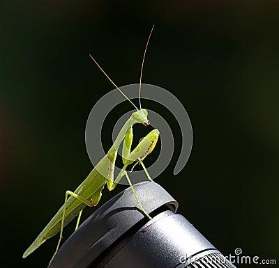 Free Praying Mantis Close-up Stock Photos - 9080673
