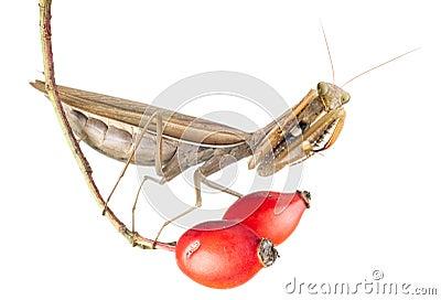 Praying mantis on plant