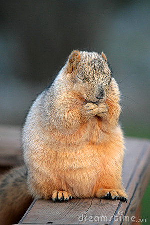 Free Praying Squirrel Stock Photo - 1839140