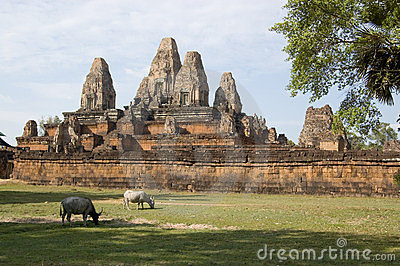 Pre Rup Temple with buffalo