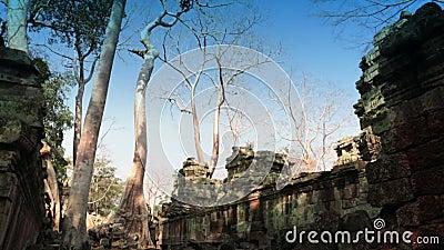 Preah可汗(它被翻译当A神圣的剑) 寺庙,暹粒,柬埔寨的树和废墟 影视素材
