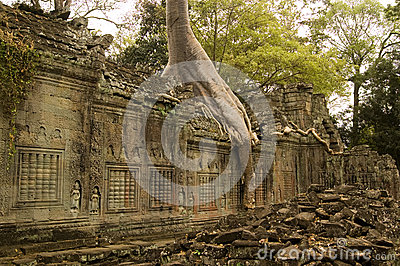 Preah Khan Temple and Tree