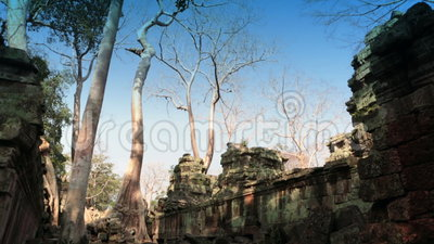 Preah Khan(it is translated as A sacred sword). Trees and ruins of the temple, Siem Reap, Cambodia.  stock footage