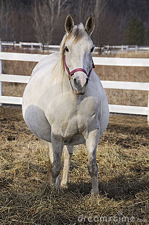 Free Pregnant Horse Stock Photography - 19106422
