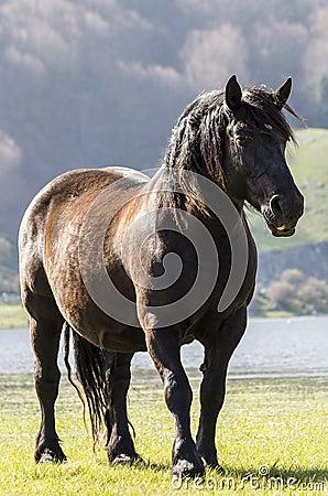Free Pregnant Mare Royalty Free Stock Photos - 40003628