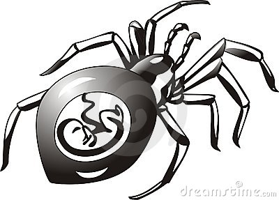 Pregnant spider 2