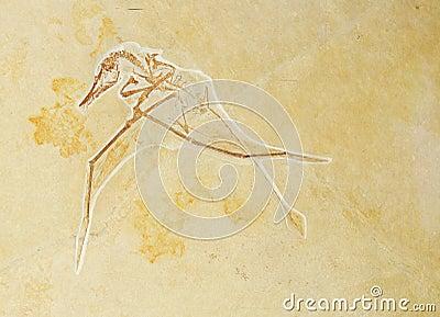 Prehistoric background