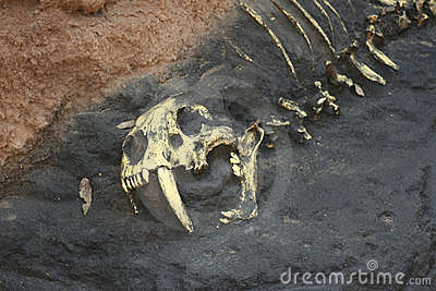 Prehistoric Bones in Rock