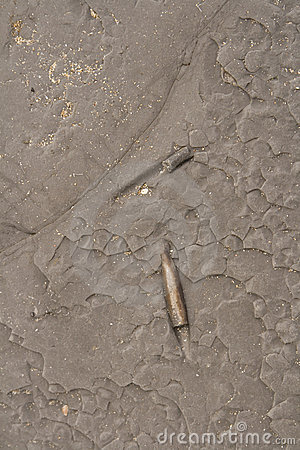 Prehistoric Fossils in rock background
