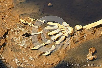 Prehistoric Predator Claws