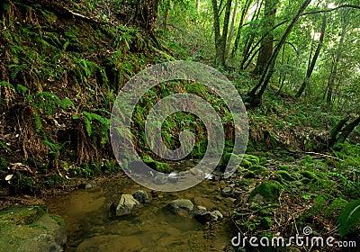 Prehistoric Rain Forest