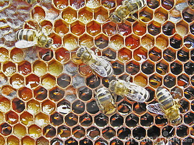 Preservation Of Pollen. Bee-bread. Stock Photo - Image: 4957130