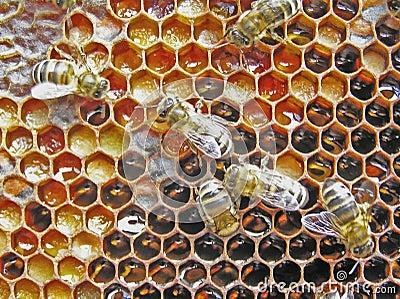 Preservation of pollen. Bee-bread.