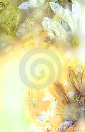 Free Preserved Flowers Four Stock Photography - 4376342
