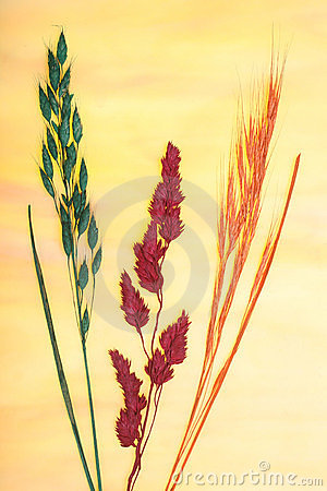 Pressed grasses