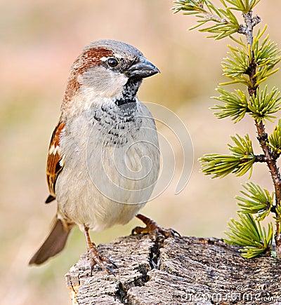Free Pretty Bird Royalty Free Stock Photography - 1672417