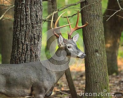 Pretty Buck