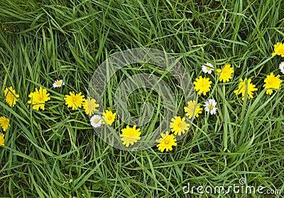 Pretty Dandelion Chain