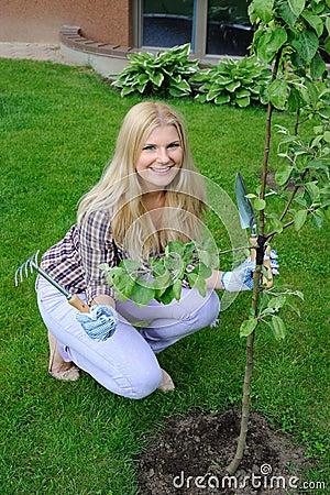 Pretty gardener woman planting apple tree