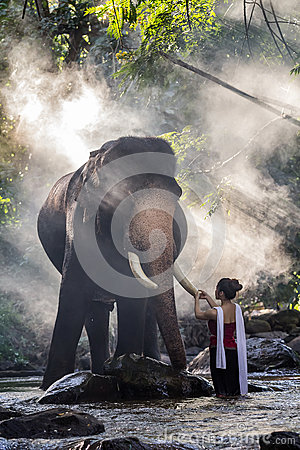 Free Pretty Girl In Traditional Thai Costumes Touching Elephant`s Ivory Stock Images - 82357664