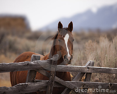 Pretty Horse at Fence