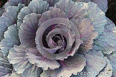 Pretty ornamental plant
