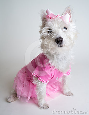 Pretty in Pink - Cute ballerina dog in pink tutu
