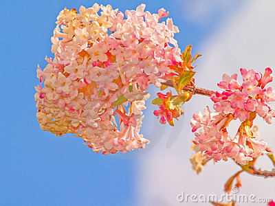 Pretty pink flower with the blue sky