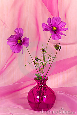 A Pretty Pink Flower in Vase