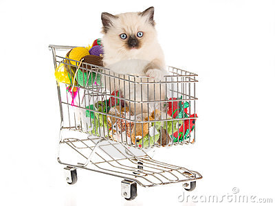 Pretty Ragdoll kitten in shopping cart