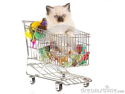 Pretty Ragdoll kitten in shopping cart