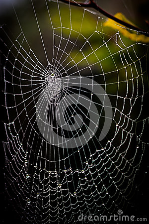 A pretty scary frightening spider web for halloween