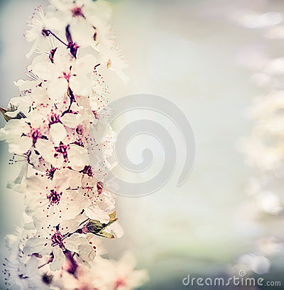 Free Pretty Springtime Floral Background With Cherry Blossom In Pastel Color With Bokeh Lighting, Floral Stock Photo - 90271410