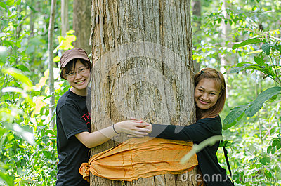 Preventing Golden Teak tree from being cut down Editorial Photo