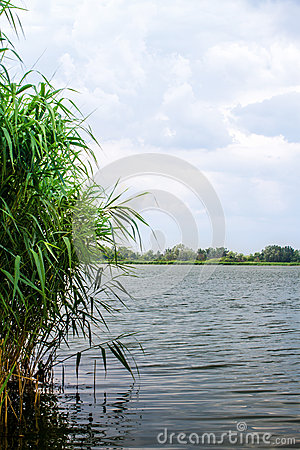 Preview landscape river reeds and stems