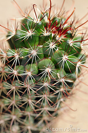Prickly cactus closeup shot