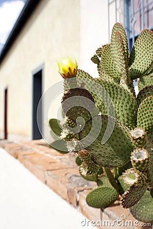 Free Prickly Pear Cactus Stock Photo - 5125740