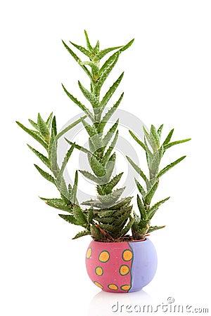 Prickly succulent plant