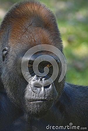 Primate Portrait