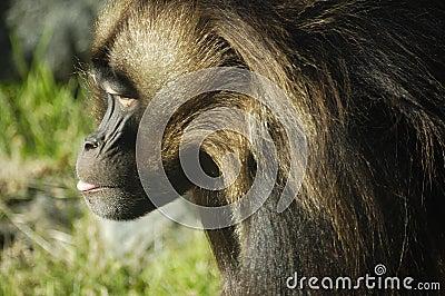 Primate Profile