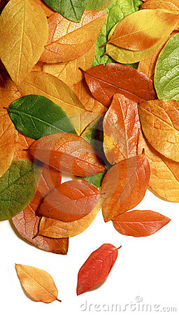Primer de las hojas de otoño