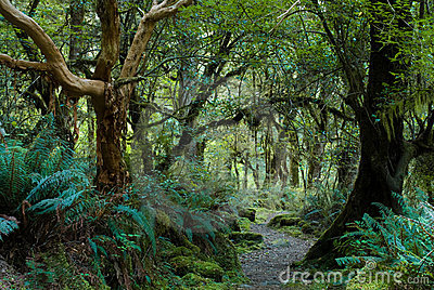 Primeval forest on kepler track