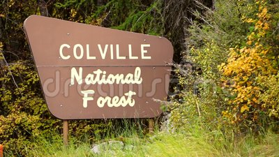 The Outdoor Wooden Roadside Sign Says Colville National Forest. A primitive monument type sign marking the entry to Colville National Forest public land stands stock video
