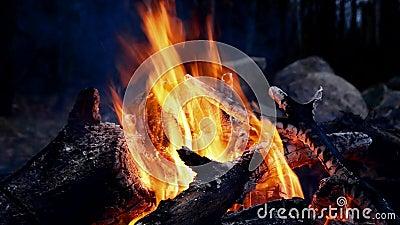Primo piano del falò del fuoco di accampamento in fiamme alla notte con i tizzoni caldi ed i carboni rossi stock footage