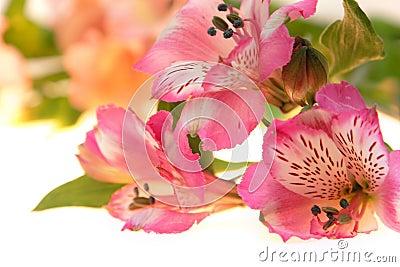 Primo piano delle orchidee su bianco
