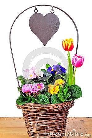 Primrose basket spring  heart