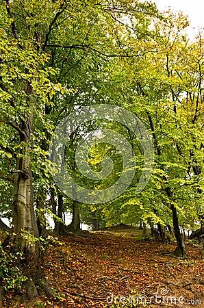 Principio del otoño