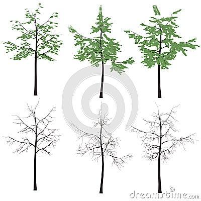 Print  tree leaves trunk  silhouette